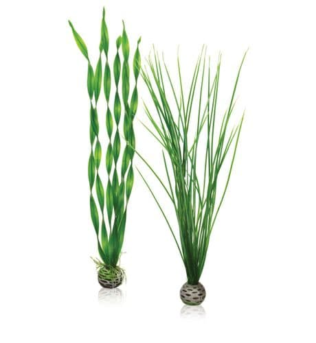 Biorb Easy Plant Set Large Green