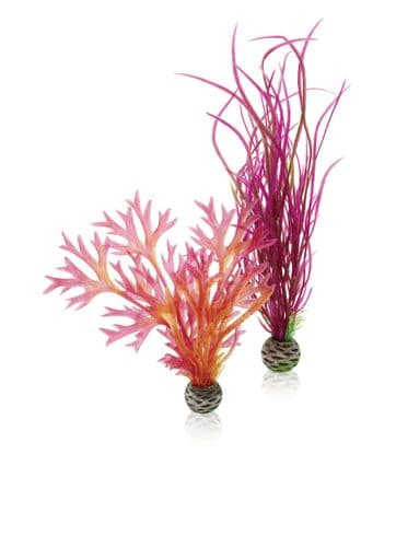 Biorb Plant Set Medium Red & Pink