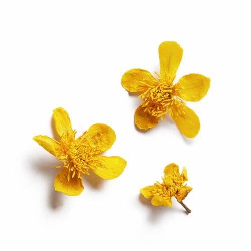 Native Collection: Marsh Marigolds