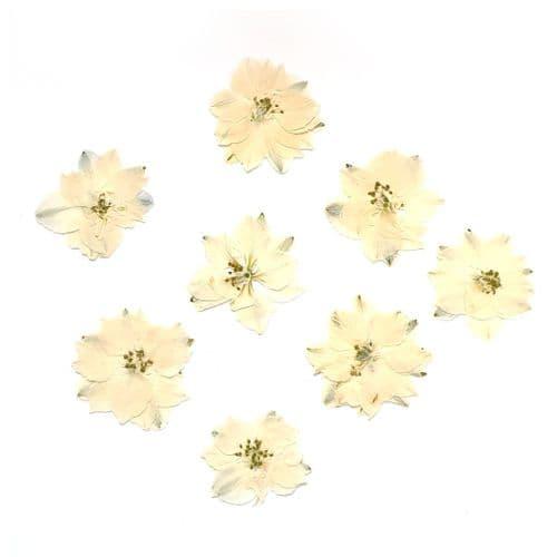 Antique Lace Larkspur Flowers