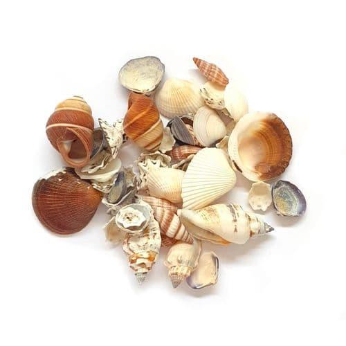 Beach Shells - Cornwall Mix