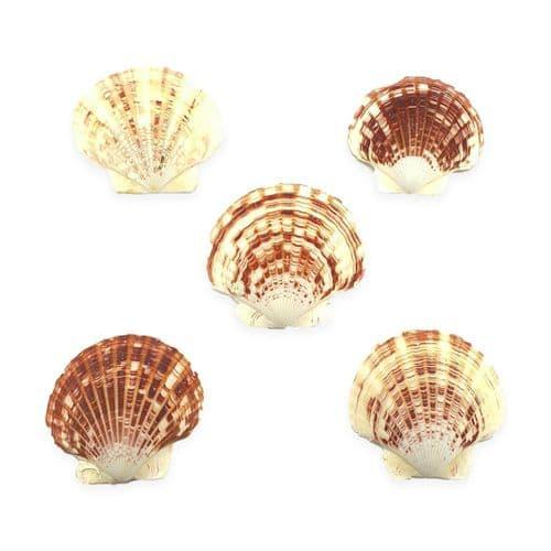 Candy Fan Scallop Shells - Small
