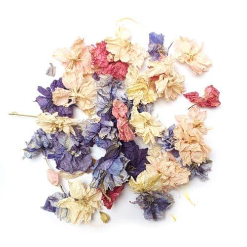 Delphinium Flowerheads - Flower Field