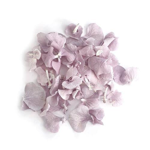 Hydrangea Petals - Mauve Blush