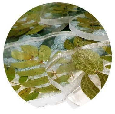 Leaves & Greenery