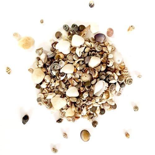 Mini Beach Shells