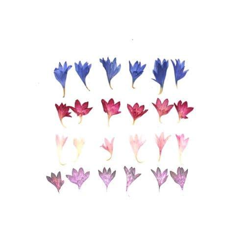 Mixed Colour Cornflowers