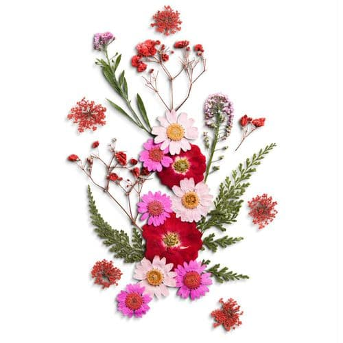 Pretty In Pink Flower Collection