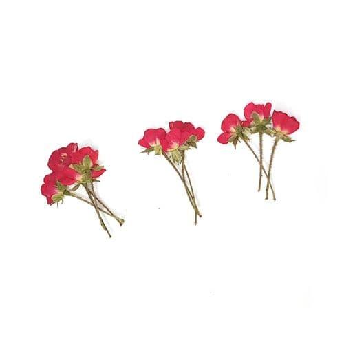 Side-Pressed Stemmed Red Roses: MINI